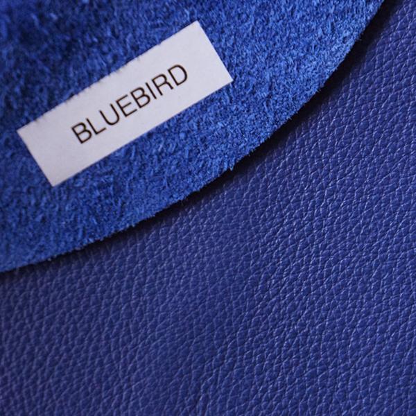 革見本 BLUEBIRD 600 600